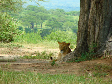 On safari in Tanzania