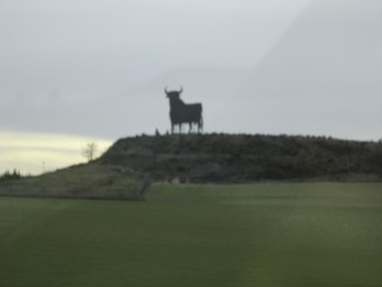 Bull on the side of the road in Rioja