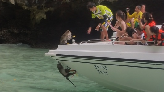 Stopping off to watch boats be attacked by monkeys.