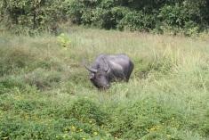 Water buffalo along the ride