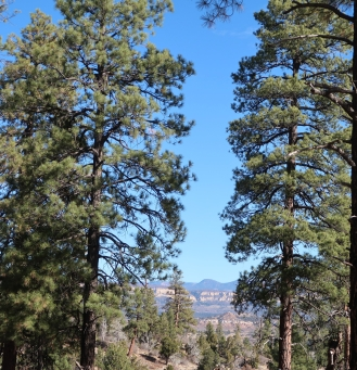 A peek of the canyon from the trail.